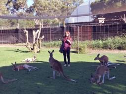 kangaroo fencing
