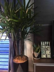 plant7